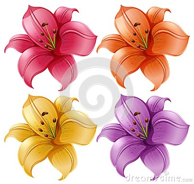 Free A Set Of Lily Flowers Stock Photo - 121992320