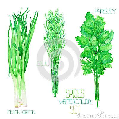 Free A Set With The Watercolor Spices: Bundles Of The Onion Green, Dill, Parsley, Cilantro. Royalty Free Stock Photography - 66333727