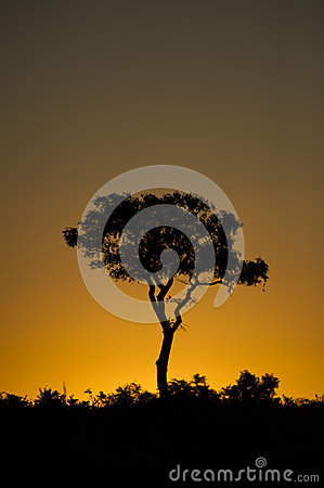 Free A Single Tree Against An African Sunset Royalty Free Stock Photos - 30489058