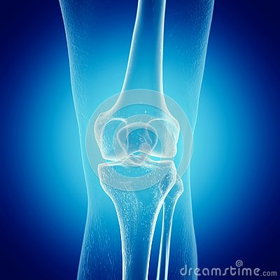 Free A Skeletal Knee Royalty Free Stock Images - 127831999