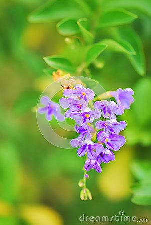 Free A Small Cluster Of Purple Ultraviolet Colored Flowers Stock Photos - 111757663