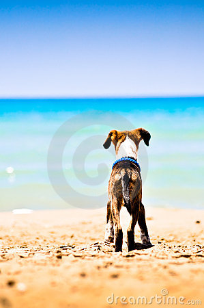 Free A Small Dog On The Beach Royalty Free Stock Photography - 15308547