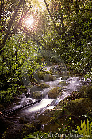Free A Stream In The Rainforest Stock Photos - 2072973