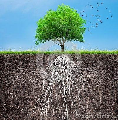 Free A Tree And Soil With Roots And Grass Royalty Free Stock Photography - 139013687