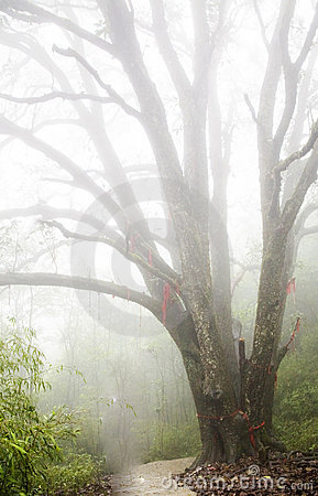 Free A Tree In Thick Fog Stock Photos - 9744233