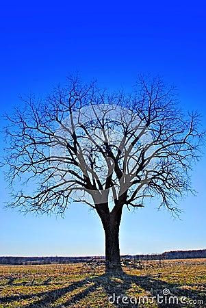 Free A Tree Reflecting Shadows Royalty Free Stock Photos - 2234288