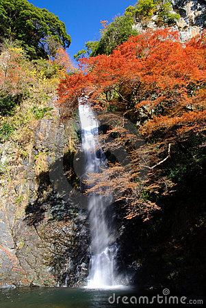 Free A Waterfall With Japanese Maple. Stock Image - 7905511