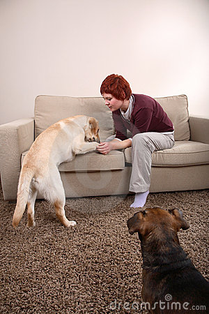 Free A Woman And Her Dogs Royalty Free Stock Photo - 4351355