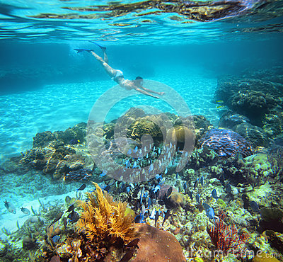 Free A Woman Snorkeling In The Beautiful Coral Reef With Lots Of Fish Royalty Free Stock Photography - 32920547