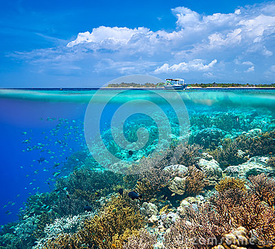 Free A Woman Snorkeling Near The Beautiful Coral Reef With Lots Of Fi Stock Image - 57623691