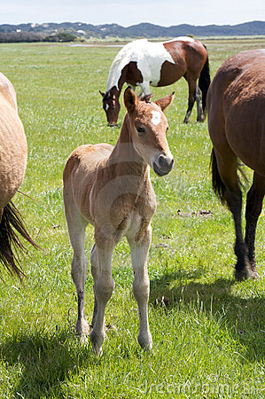 Free A Young Horse Foal, Filly Standing In A Field Mead Stock Photos - 11743253
