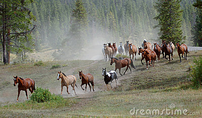 Aandrijving 1 van het paard