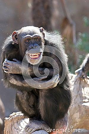 Aap die en bij menigten bij de dierentuin lacht grijnst