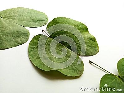 Dussehra Leaf Indian Festival Stock Photo