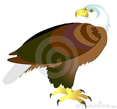 Aasvogel