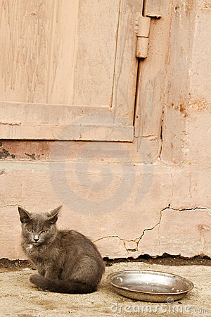 Abandoned animal eyes kitten