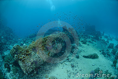 Abandoned cargo from shipwreck
