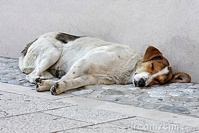 Abandoned dog on the street
