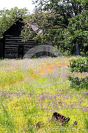 Abandoned Homestead Cabin in field of Wild Flowers
