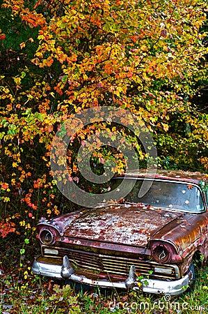 Free Abandoned Junk Car Under Autumn Foliage Royalty Free Stock Photography - 67335737