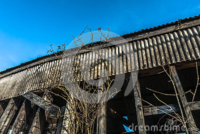 Abandoned Timber  Structure