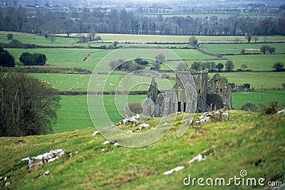 Abbey Ruin