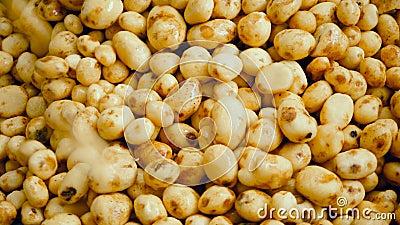 Abbondanza delle patate pulite che si muovono in una vista superiore video d archivio