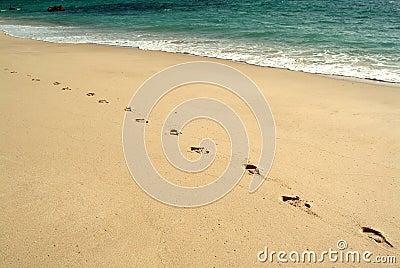 Abdrücke, gehend in den Strand