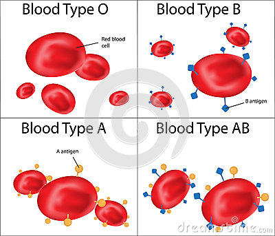 ABO Blood Group labeled Diagram