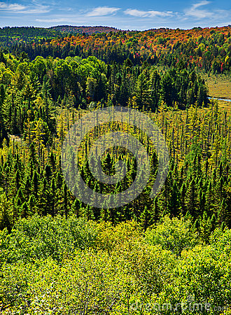 Free Above The Trees In The Autumn Forest - Vertical Royalty Free Stock Photography - 40970147