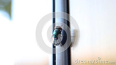 Abrigue a mosca video estoque