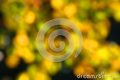 Abstract autumn blur