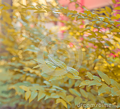 Free Abstract Autumn Leaf Tree Background Stock Images - 91840824
