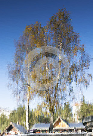 Abstract autumn tree reflection