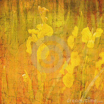 Free Abstract Background Daffodil Motif Stock Photo - 23662940
