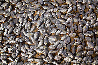 Abstract background dried fish