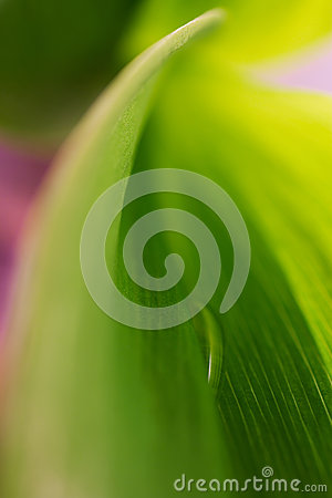 Abstract background with a drop in the green leaf