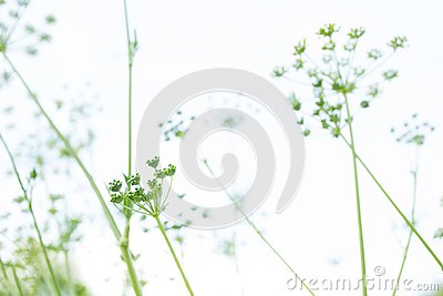 Abstract background with green grass Stock Photo