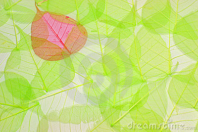 Abstract background made of green and red leaves