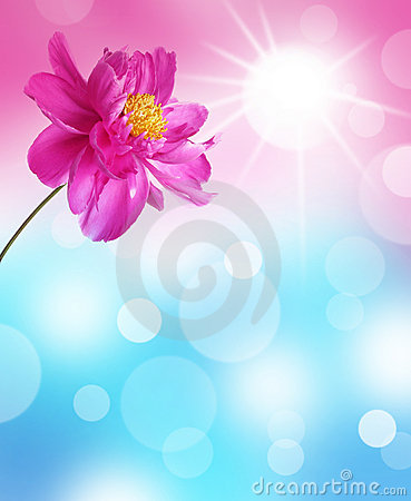 Abstract background with peony