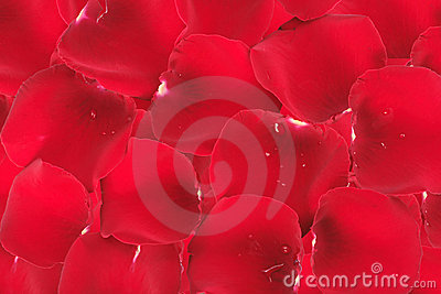 Abstract background of red rose petals