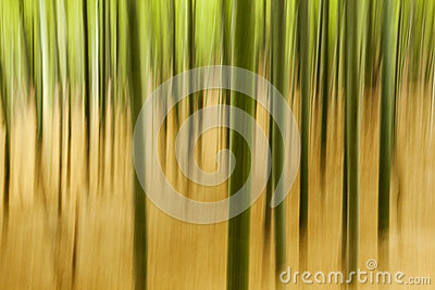 Abstract Bamboo Plants