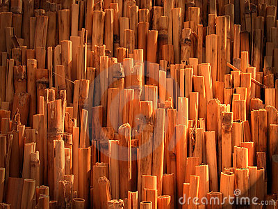 Abstract bamboo texture