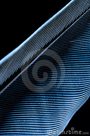 Abstract Blue Feather