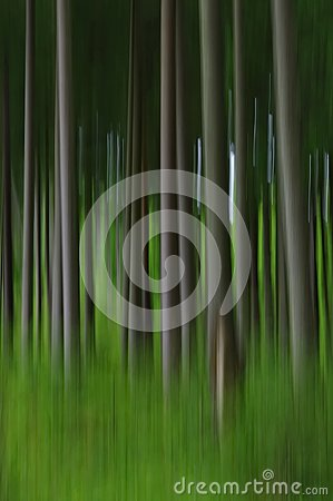 Free Abstract Blurry Pine Tree Forest Stock Images - 103081644