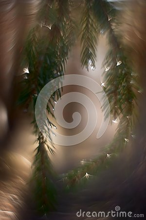 Free Abstract Bunch Of Spruce Tree Royalty Free Stock Image - 104803056