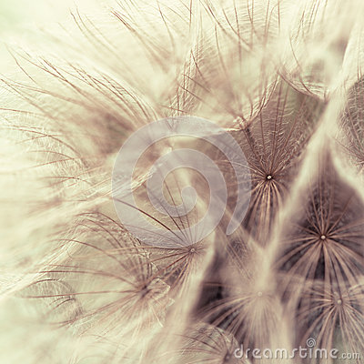 Free Abstract Closeup Of A Meadow Salsify Stock Images - 25337044