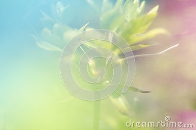 Abstract color background graphic image