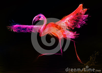 Abstract colorful bird.  Flamingo taking off