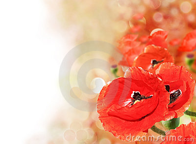 Abstract of colorful poppy field